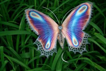 Purple-butterfly
